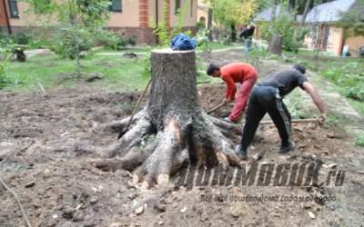 Как быстро выкорчевать плодовое дерево