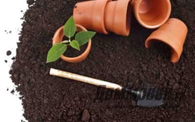 Как выбрать емкость для выращивания рассады