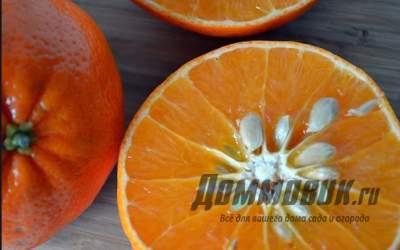 Как посадить и вырастить мандарин из косточки