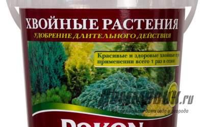 Лучшие удобрения для хвойных растений