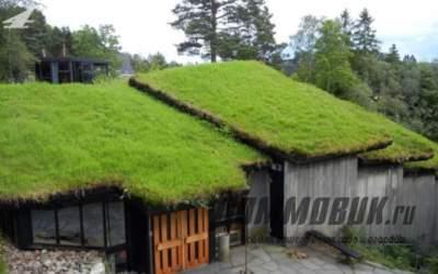 Зеленые крыши — преимущества и недостатки установки