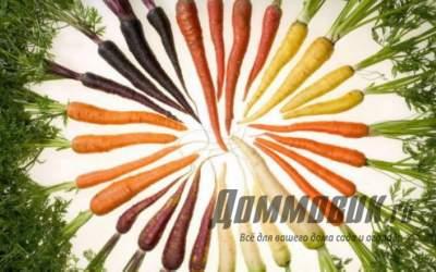 Сорта моркови для открытого грунта: выбираем лучший