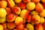 Ваши любимые сорта абрикос на даче