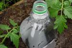 Капельный полив из пластиковых бутылок на даче