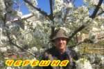 Embedded thumbnail for Как бороться с вредителями черешни