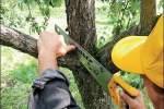 Embedded thumbnail for Санитарная обрезка деревьев