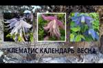 Embedded thumbnail for Как ухаживать за клематисом весной