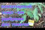 Embedded thumbnail for Как удобрять томаты
