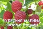 Embedded thumbnail for Как правильно посадить малину и не допустить ошибок