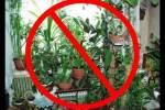 Embedded thumbnail for Какие цветы можно держать дома а какие не стоит