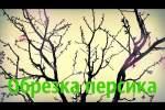 Embedded thumbnail for Обрезка персика весной