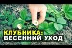 Embedded thumbnail for Как ухаживать за клубникой весной