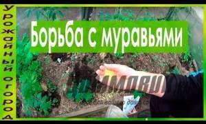 Embedded thumbnail for Несколько методов борьбы с муравьями