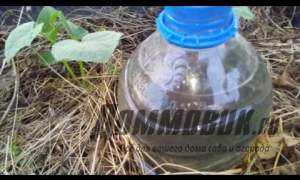 Embedded thumbnail for Капельный полив своими руками из пластиковых бутылок