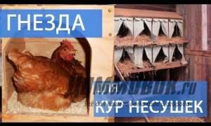 Embedded thumbnail for Как сделать гнездо для кур