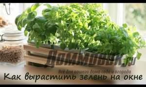 Embedded thumbnail for Как вырастить зелень на подоконнике