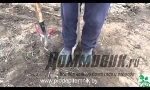 Embedded thumbnail for Посадка черешни весной