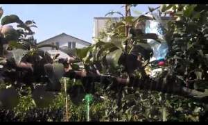 Embedded thumbnail for Как ускорить плодоношение груши