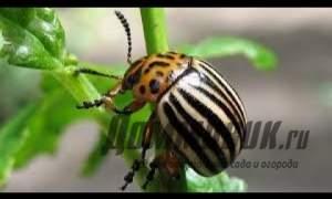 Embedded thumbnail for Средство от колорадского жука