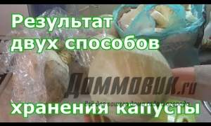Embedded thumbnail for Хранение свежей капусты