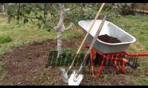 Embedded thumbnail for Осенние работы в саду