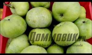 Embedded thumbnail for Как хранить яблоки на зиму