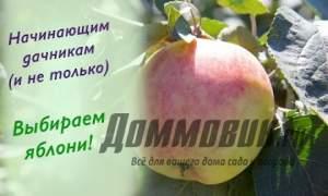 Embedded thumbnail for Лучшие сорта яблонь