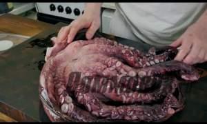 Embedded thumbnail for Необычное самиши из осьминога