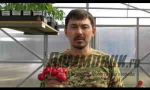 Embedded thumbnail for Выращивание редиса в теплице