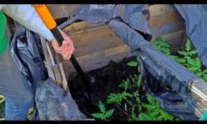 Embedded thumbnail for Как удобрять деревья осенью