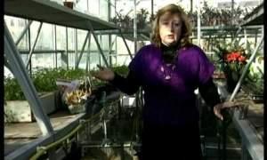Embedded thumbnail for Когда сажать тюльпаны