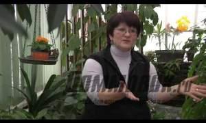 Embedded thumbnail for Подбор растений для зимнего сада