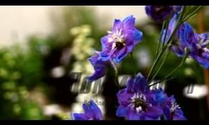 Embedded thumbnail for Растения ландшафтного дизайна