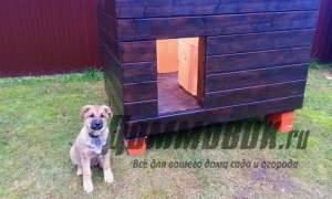 Embedded thumbnail for Как сделать будку для собаки