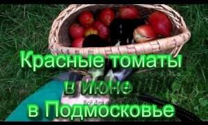 Embedded thumbnail for Как вырастить рассаду помидоров
