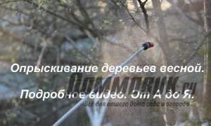 Embedded thumbnail for Зачем опрыскивать деревья весной