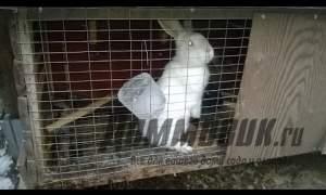 Embedded thumbnail for Как поить кроликов зимой на улице