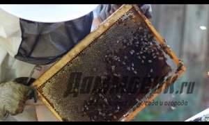 Embedded thumbnail for Как ухаживать за пчёлами весной